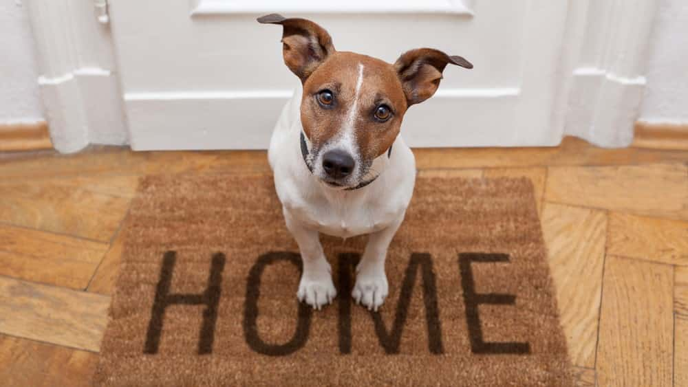 How to get rid of dog smell in your home.