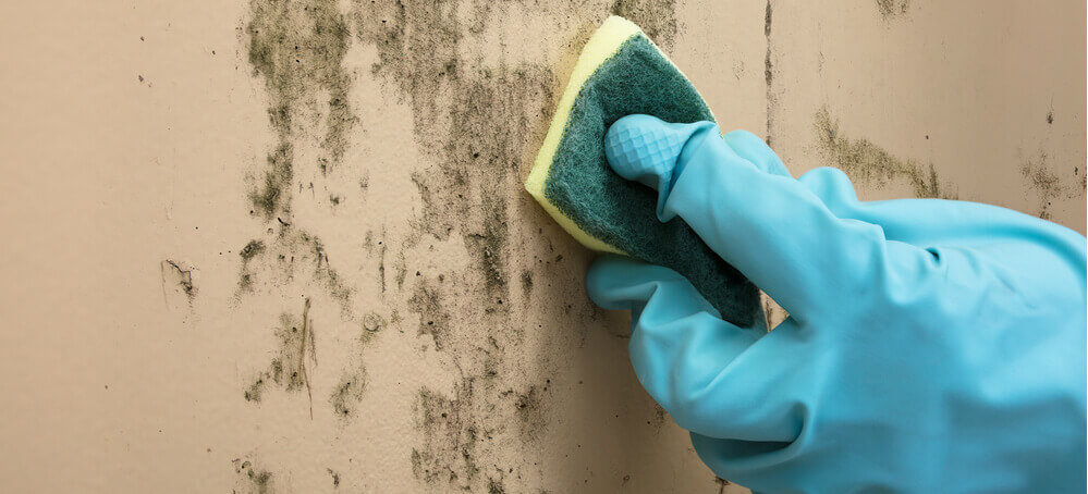 Cleaning mould with sponge
