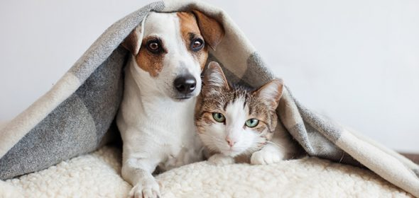 Dog and cat urine problems