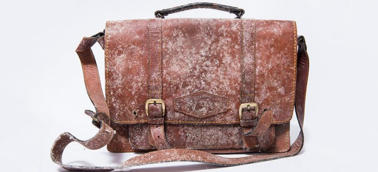 How to Remove Mould and Mildew from Leather
